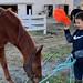 Seven-year-old Horseman