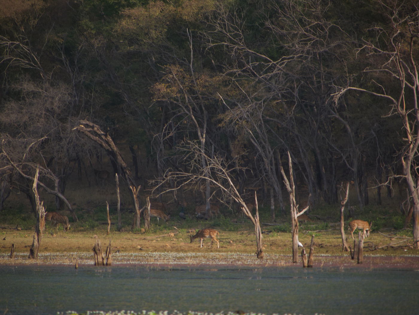 113-India-Ranthambore