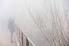 Fotografa Nella nebbia ....