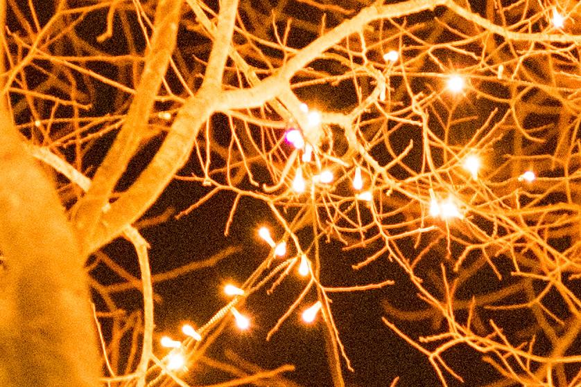DSC01296pink light