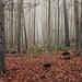 In the Woods by Netsrak