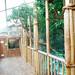Tropical house; Free flight doves, jays