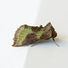 Burnished Brass, St Bees, Cumbria, England