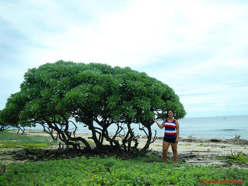 Pygmy tree