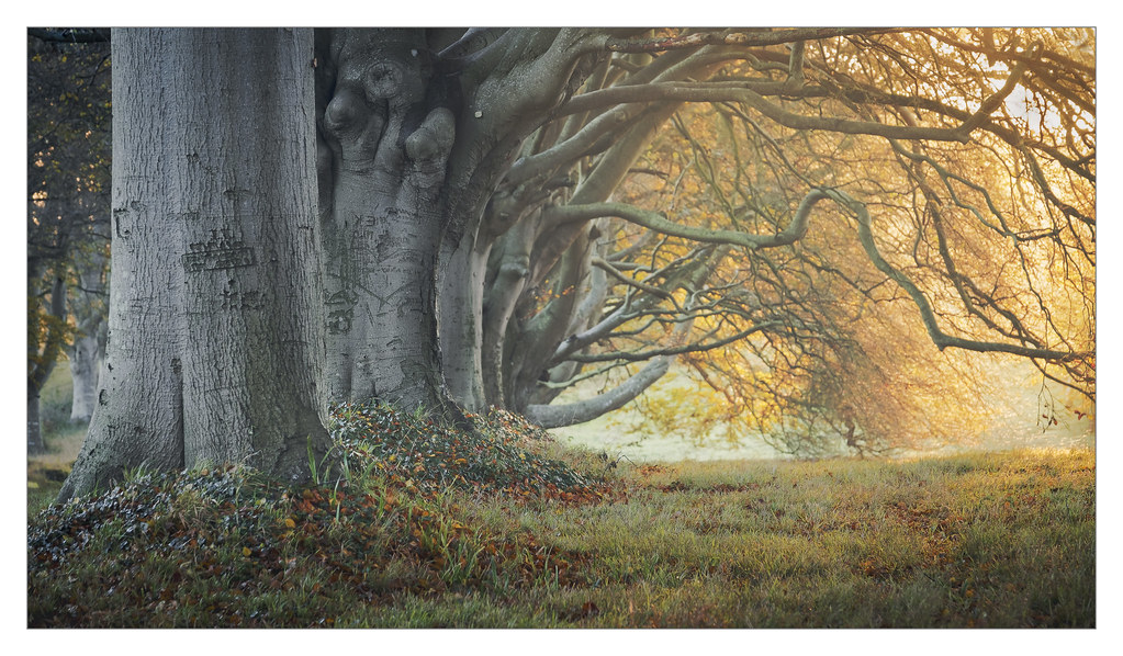 Beech Archway