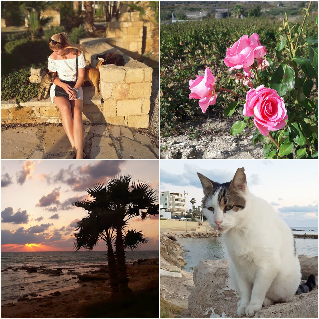 pafos-collage-cats-roses-sunset-palmtrees