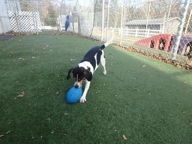 11/26/17 Football Play :D