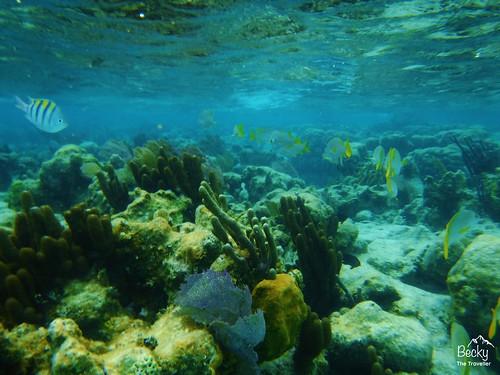 Caye Caulker Belize - stunning underwater shots