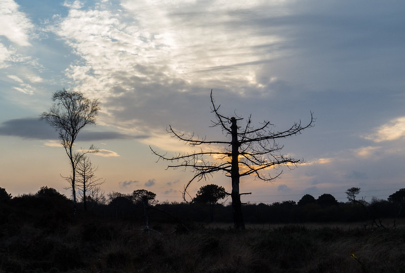 The sun sets over Upton Heath