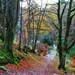Birnam Glen Path