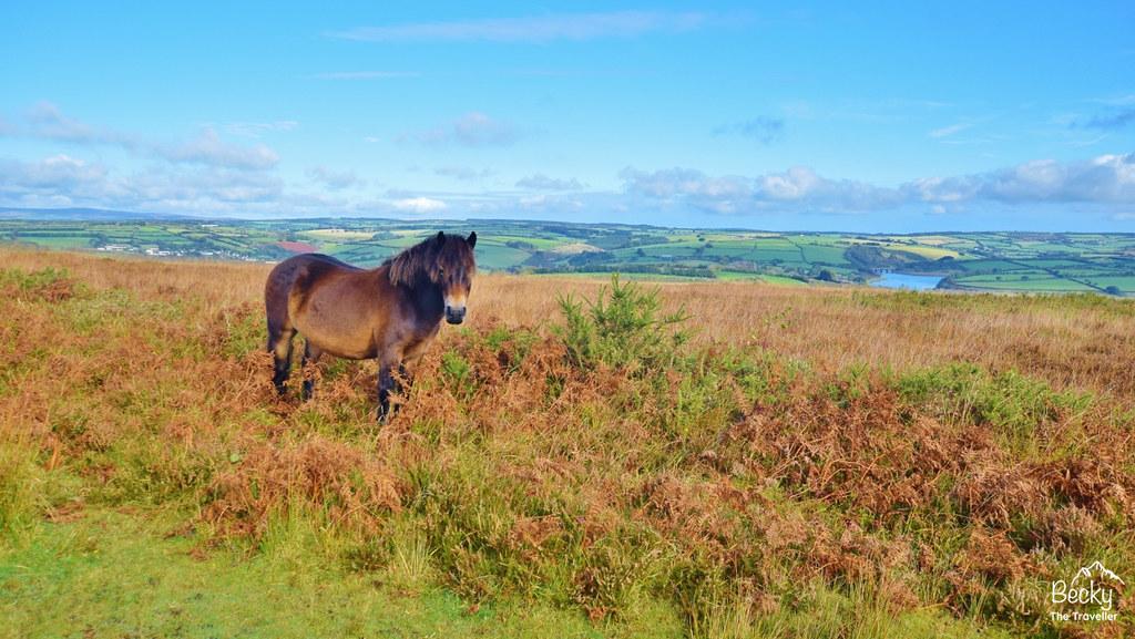 Haddon Hill - Exmoor - R (4)