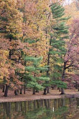 Wheaton Regional Park 9 Nov 2017 (11)