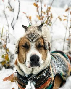 LADmob.com This Cat And Dog Love Travelling Together, And Their Pictures Are Absolutely Epic