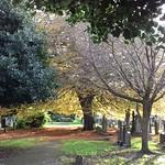 Flaybrick Autumn #3