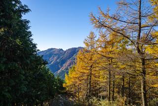 檜とカラマツの急斜面・・・小持・大持山を眺めながらシラジクボへ