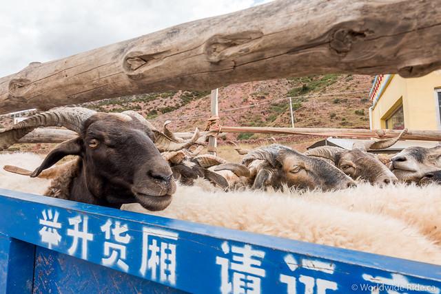 Tibet_-4