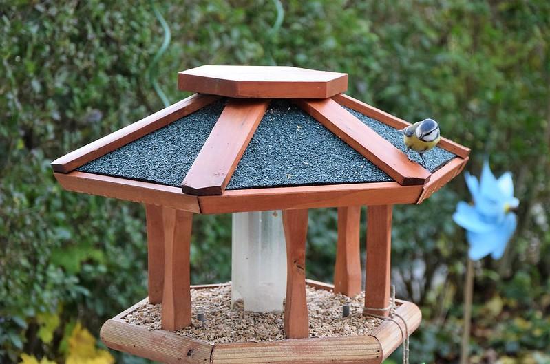 Birdhouse 19.11 (1)