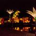 Christmas Glow RHS Wisley 02 December 2017 (56)