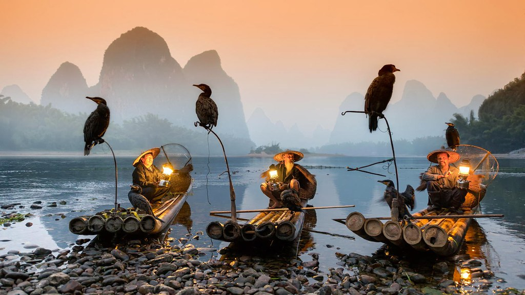 Image result for cormorant fishing