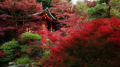 Fiery Autumn / Kyoto Bishamon-do