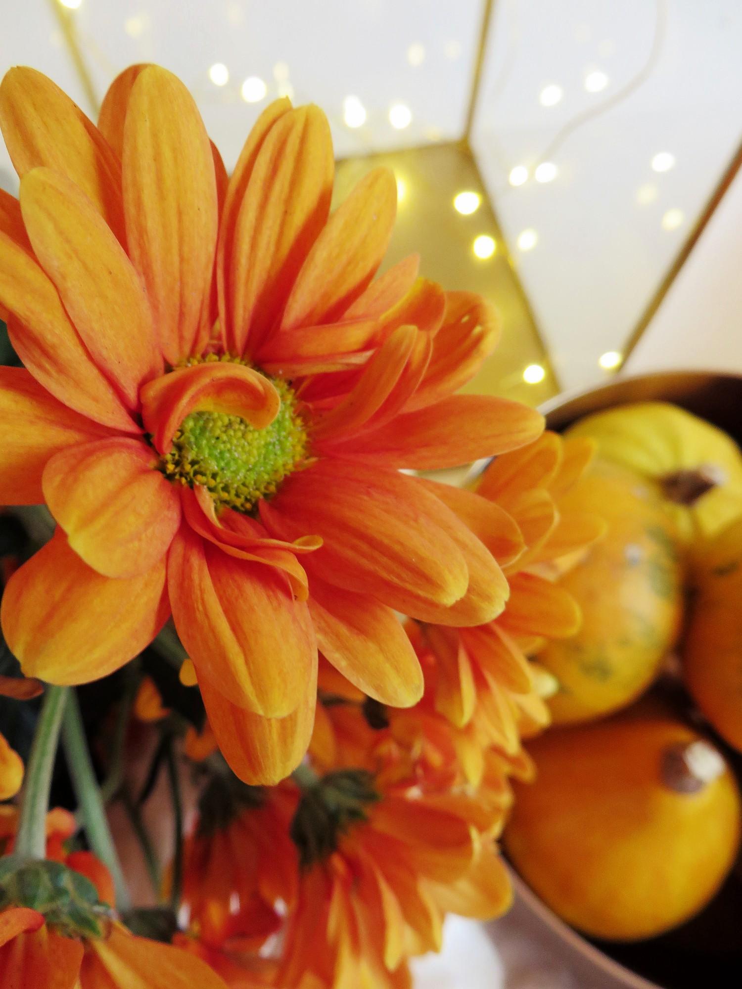 oranssiakotona2