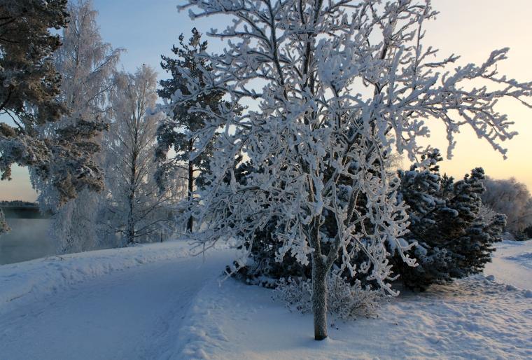 Luminen joulu 2012 3