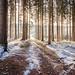 Winter path by Sebo23