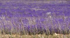 St-Jean-de Sault - Couleurs de Provence