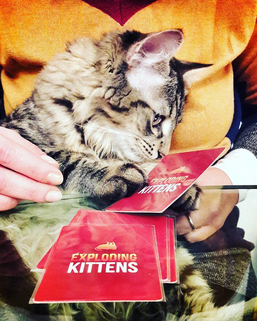 Exploding kitten #play #fun #life #home #funny #cards #cat #kitten #kittens #explodingkittens #amazing #followme #igers #igersitalia #igersmilano #pets #petstagram #instagood #photo #colorful