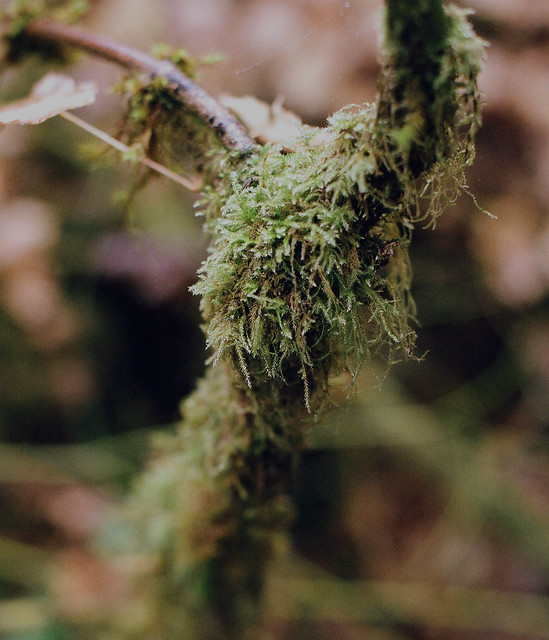 mossy indeed