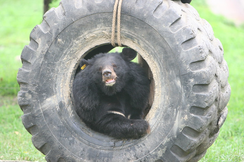 Freedom plays with a tyre