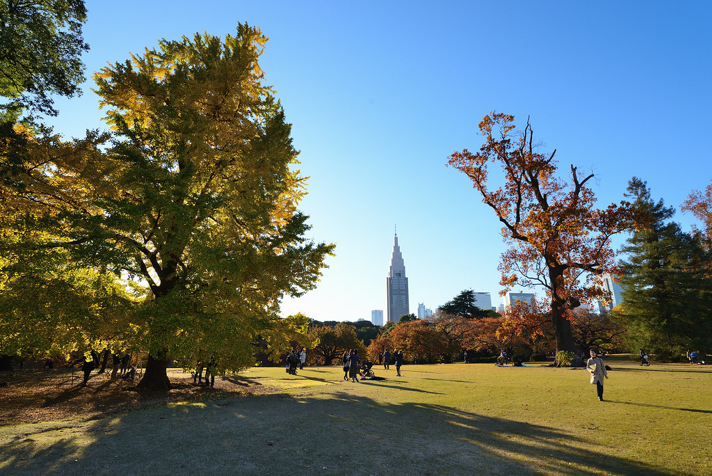 Shinjuku Gyoen Garden in autumn.  秋の新宿御苑