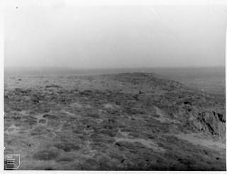 General view of ex-Senecietum, July 1949.