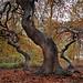 Dancing Trees by Sandra OTR
