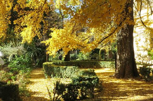 El jardin en otoño