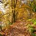 Autumn colours at Dunkeld
