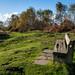 Runcorn Hill-3