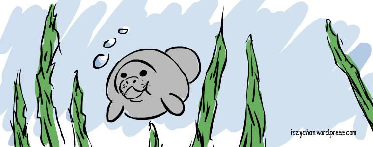 grey manatee underwater