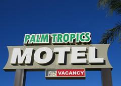Palm Tropics