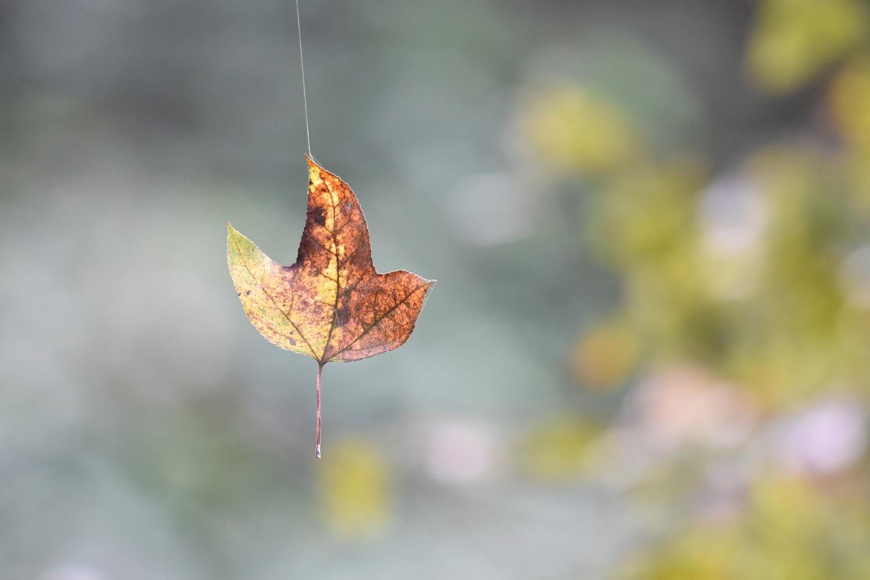 Leaf_9703