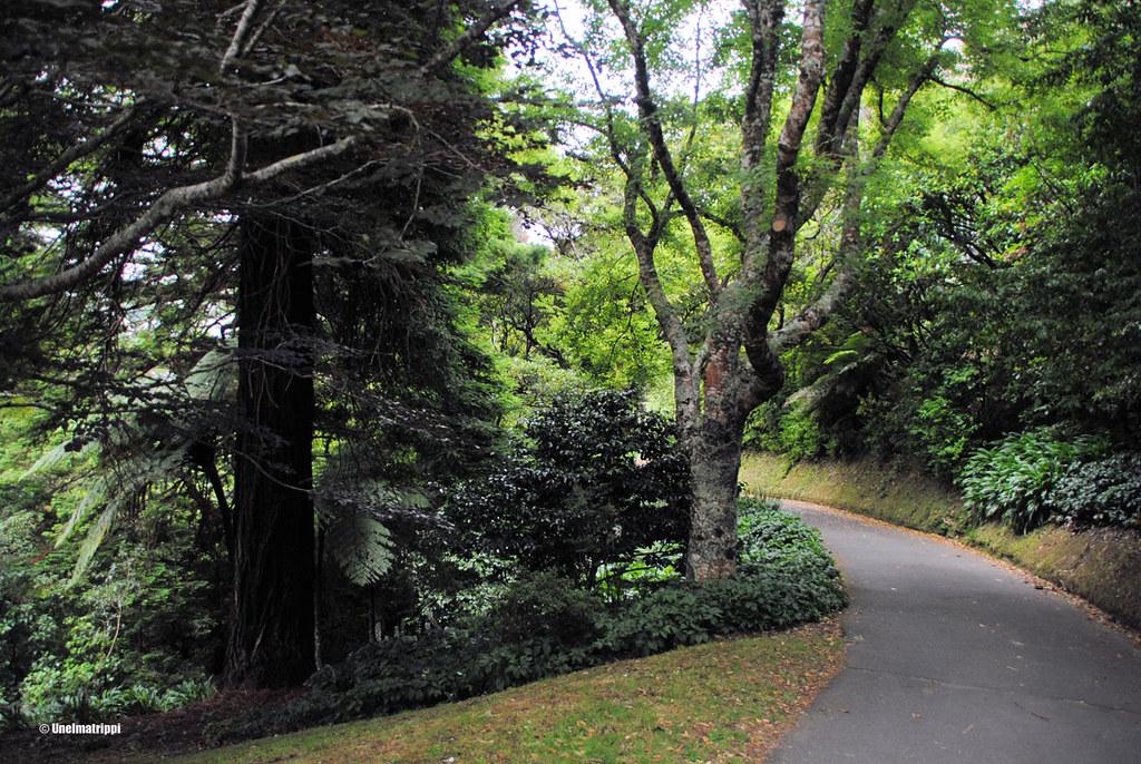 Wellingtonin kasvitieteellisessä puutarhassa, Uusi-Seelanti