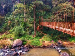 Parallel #tourism #india #abbeyfalls #nature #bridge #adventure