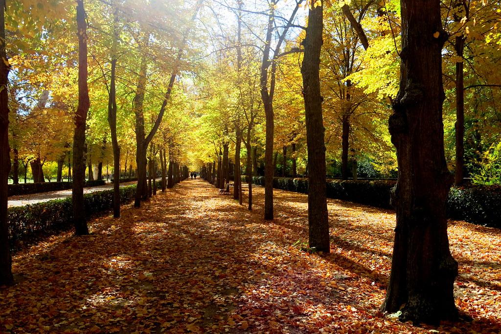 alfombra de hojas caídas