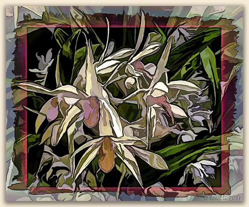 orchid orchids orchideen flowers flower fleur flora blume blumen blüten bloom blossom blossoms blooms textures texturen texture textur topaz topazstudio colourful colorful bunt farbig abstract abstrakt photoborder painting painterly awardtree