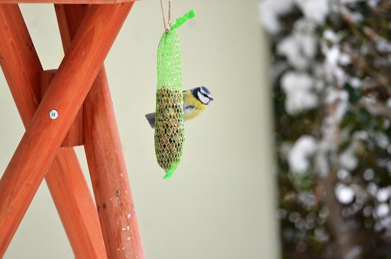 Birdhouse 01.12 (3)