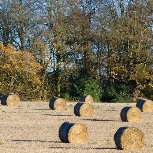 Modern haymaking, Berkswell