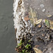 Frozen ice ...in the Bridgewater Canal, Old Trafford