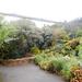 Walk through aviary; Ducks, egrets, etc