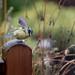 Vogelbesuch an einem verregneten Sonntag