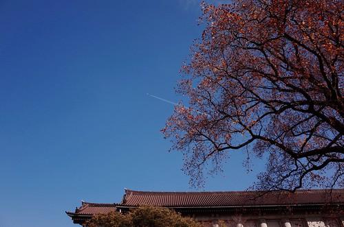 上野のお山界隈は光が溢れていた